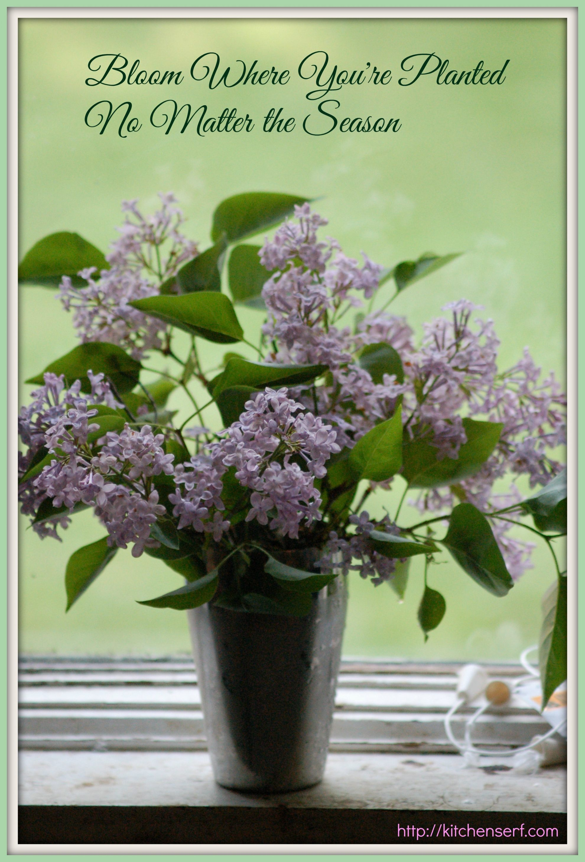 Feel Good Friday: Lilacs