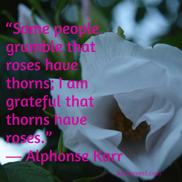 Inspiration for You and Your Thorns