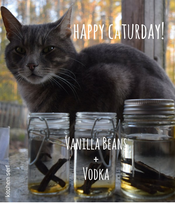 Happy Caturday + Infusions!