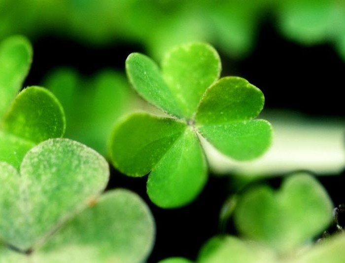 Saint Patrick's Day Recipes, Drinks + History