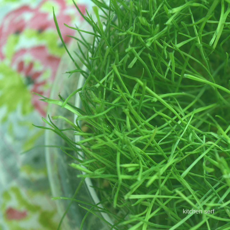 Grass: How to Grow Your Own for Tablescapes + Easter Baskets