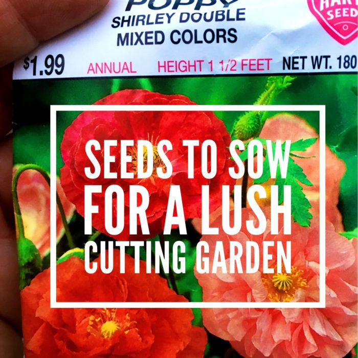 Seeds to Sow for a Lush Cutting Garden