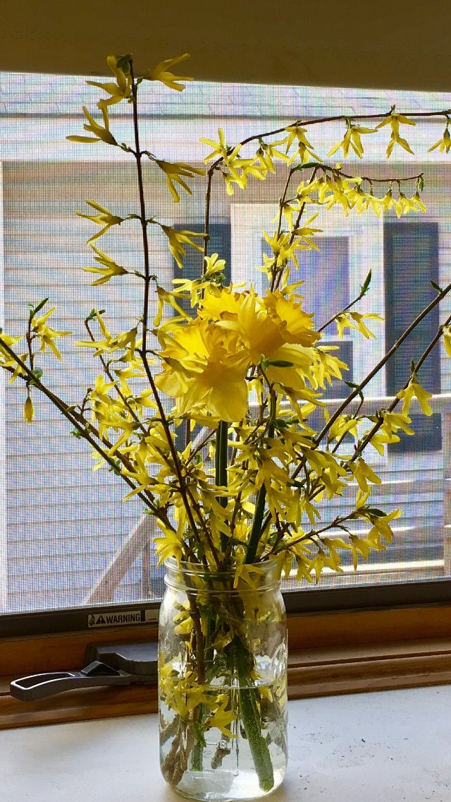 Forsythia Branches How to Arrange for a Spring Bouquet
