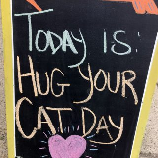 Today Is Hug Your Cat Day!